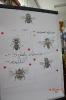 Pomagamy pszczołom!_22